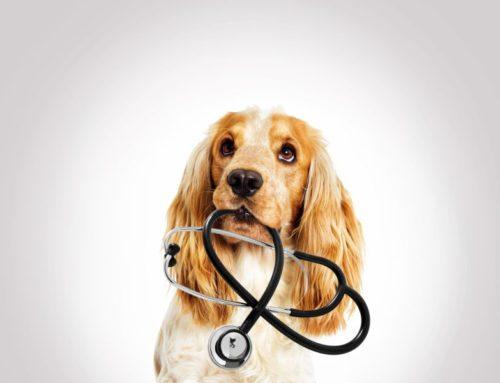 UWAGA – zmiana godzin przyjęć pacjentów